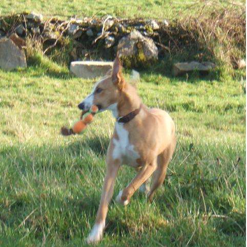 Photo of Dog missing from Copse area