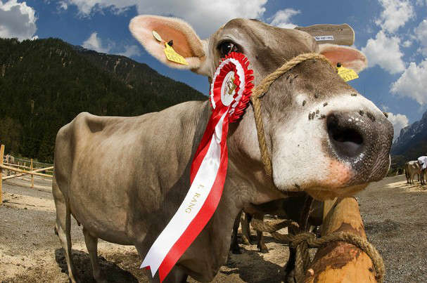 Photo of Elphin Show takes place today