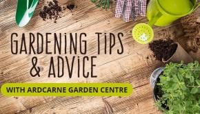 Gardening Tips and Advice with Ardcarne Garden Centre | Boyletoday.com