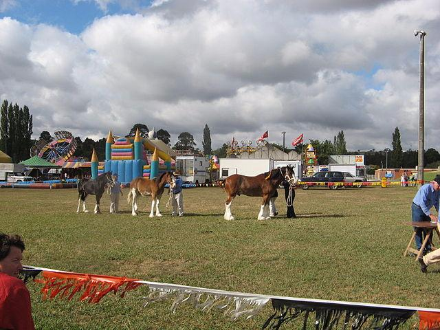 Photo of Castlerea Show on Monday