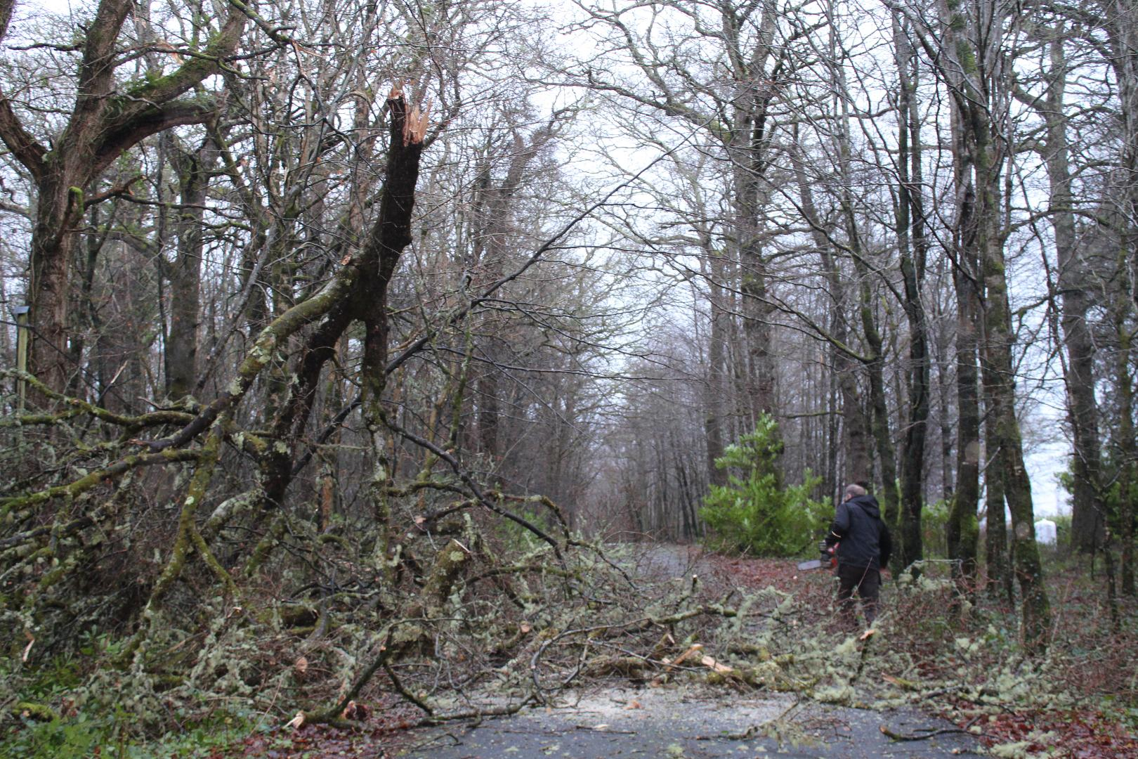 Photo of 15 fallen tree incidents around county