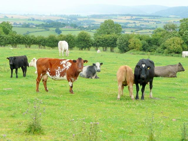Photo of Beef deal agreement welcomed
