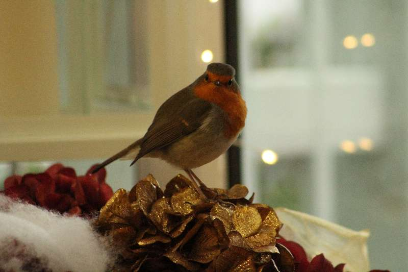 Photo of Garden Bird Event on Sunday