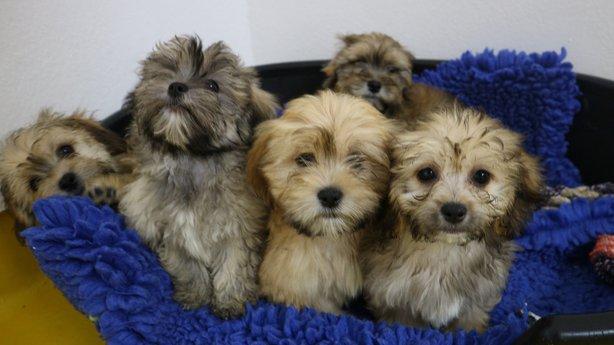 Photo of 86 dogs seized in Roscommon