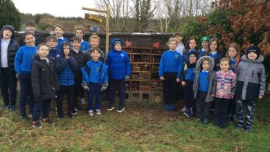 Photo of Cloonloo pupils create a bug hotel