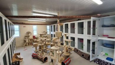 Photo of New 'Cat Hotel' opens outside Boyle