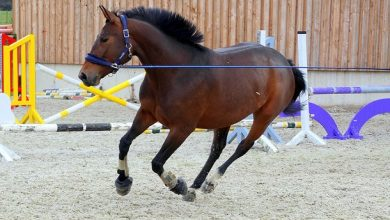 Photo of Indoor horse training arena receives planning approval