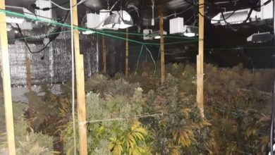 Photo of Cannabis worth €124,000 seized in Corrigeenroe
